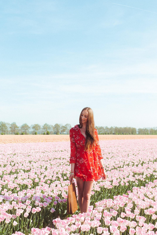 Bollenvelden Nederland tulpen tulip field Holland