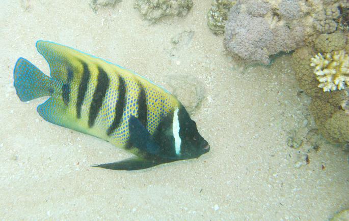 Great barrier reef Australië Australia Queensland Cairns koraal vissen nemo onderwater wereld review blog reizen reis