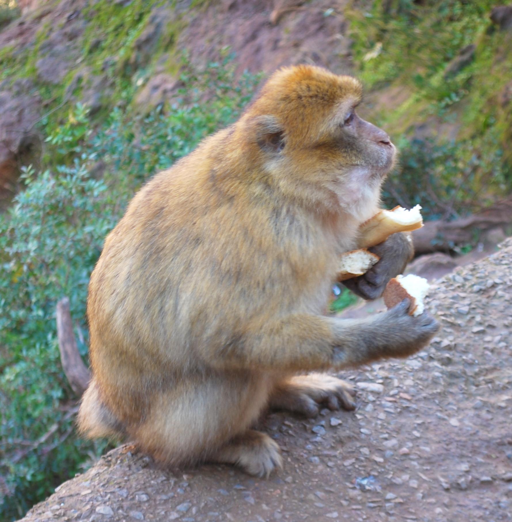 Ouzoud Marokko road trip dag trip marrakech tourist waterval watervallen aap wilde apen lifestyle by linda