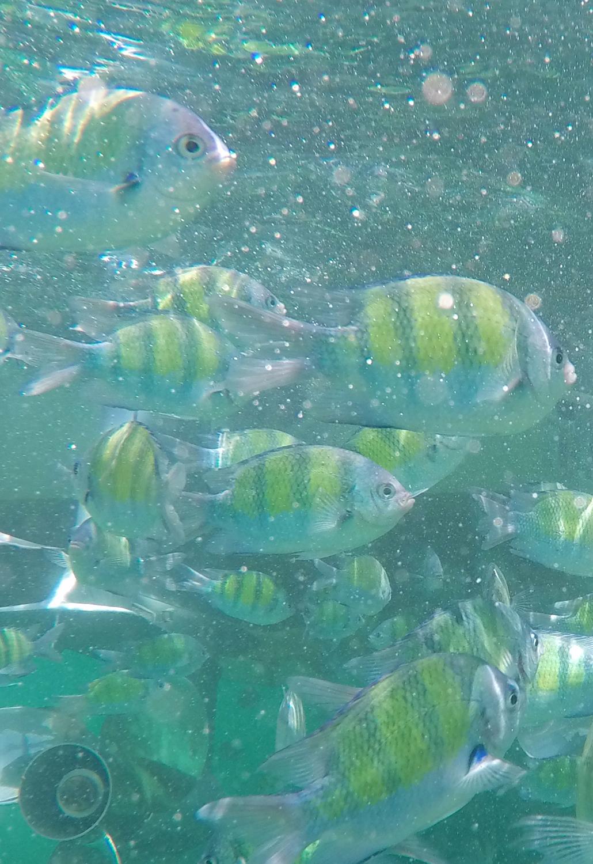 Koh Phi Phi Islands Lifestyle by linda