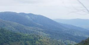 Dit is waarom Springbrook National Park op jou Australië lijst hoort