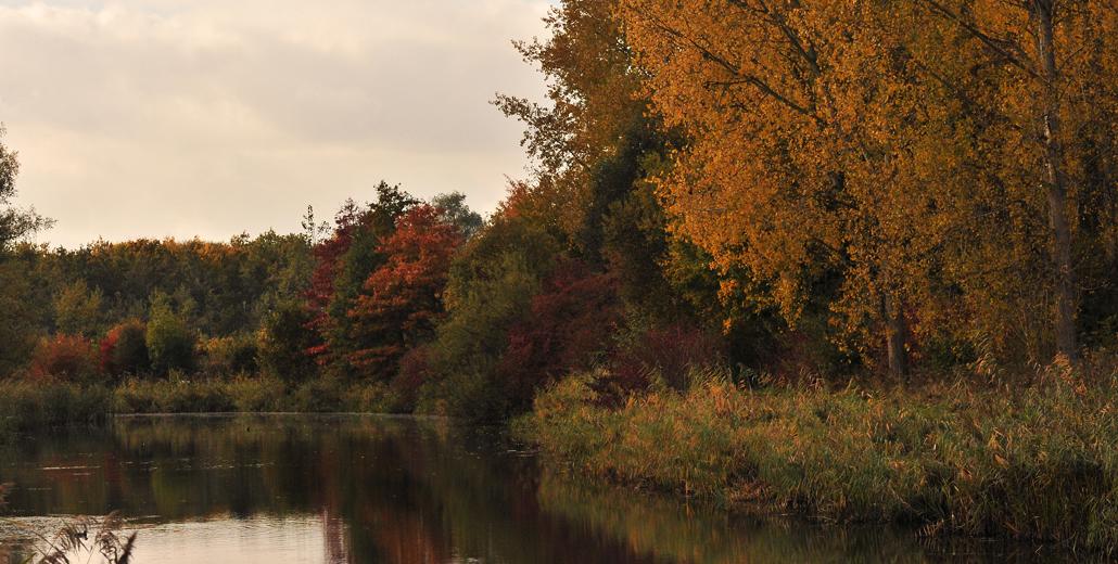 Autumn leaves | Opnieuw een afscheid
