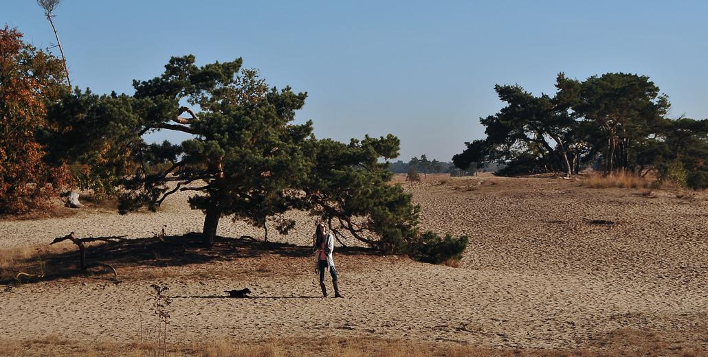 loonse en drunense duinen