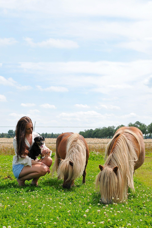 A day at the farm alpaca