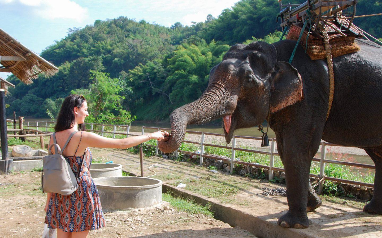 olifant olifanten Thailand Elephant parade