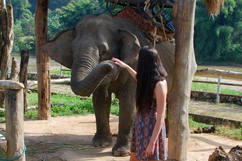 Olifanten in Thailand | Elephant Parade