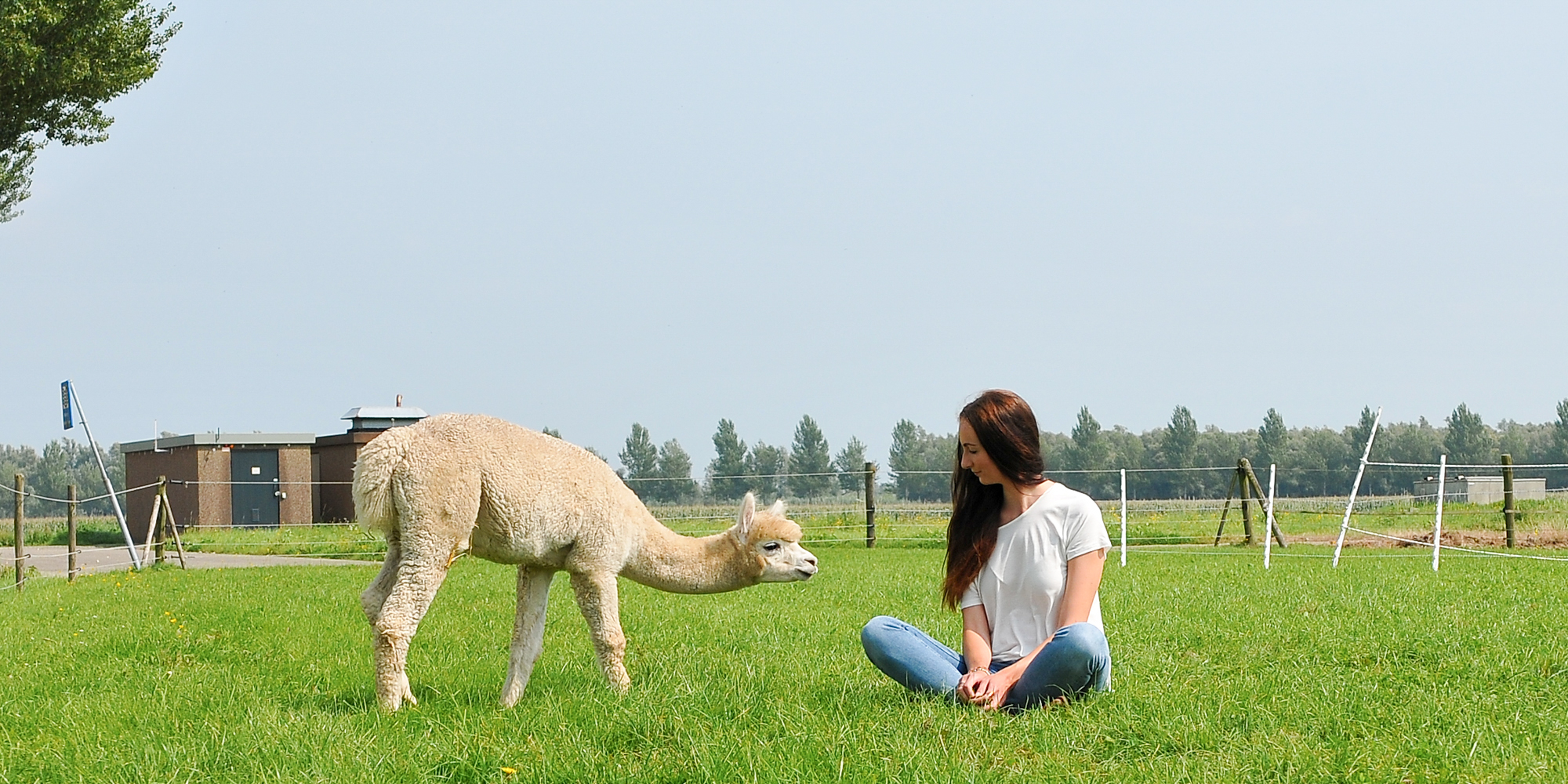 Alpaca Lifestyle by Linda