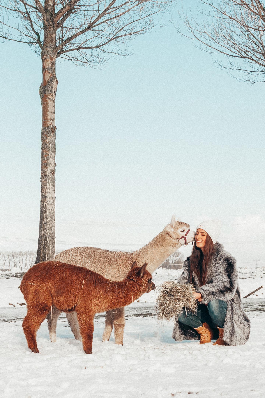 Snow Fun | Alpaca's & Fluffy Coat