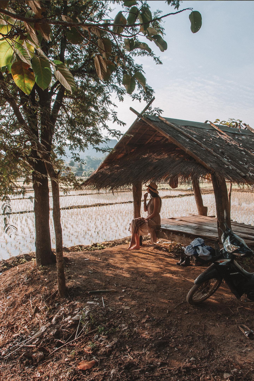 Chiang Rai Thailand rice field rijstvelden