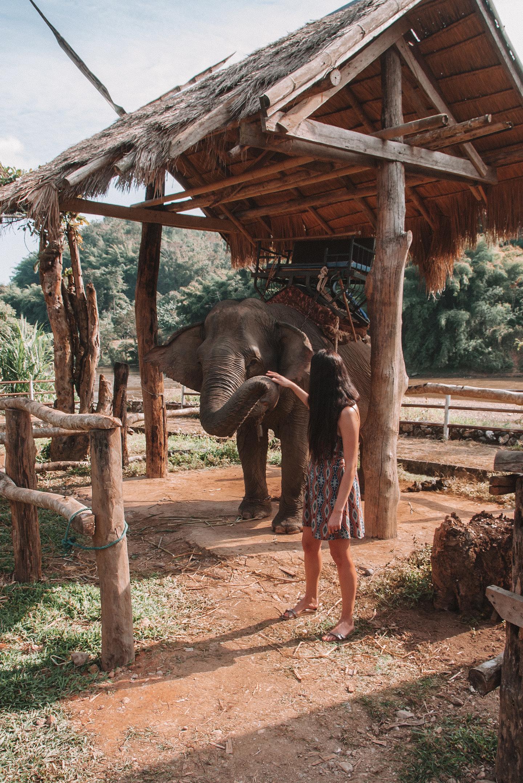 Chiang Rai Thailand elephant sanctuary