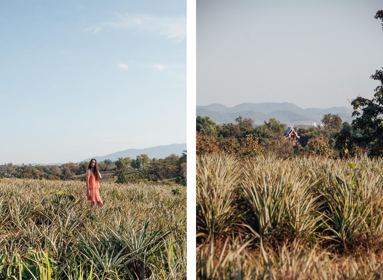 Chiang Rai Thailand pineapple