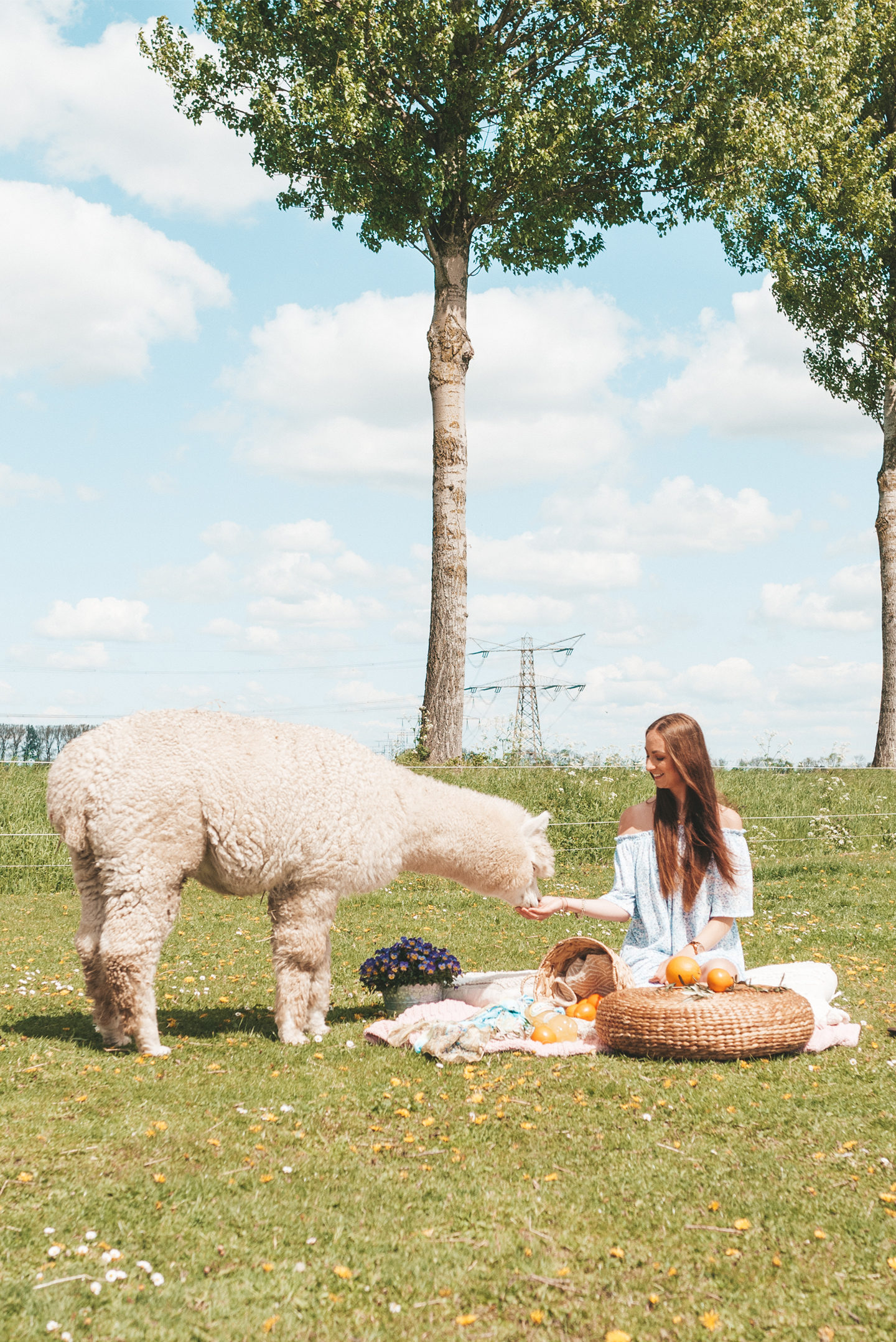 Spa fruit alpaca picnic