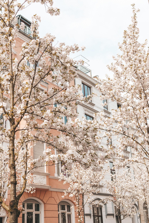 Bonn Duitsland Germany bloesem blossom