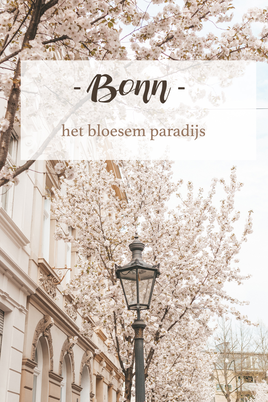 Bonn Duitsland bloesem paradijs