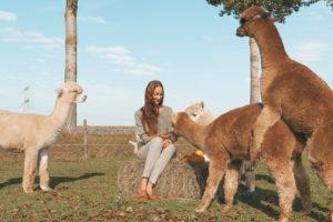 Dit wist je nog niet over alpaca's