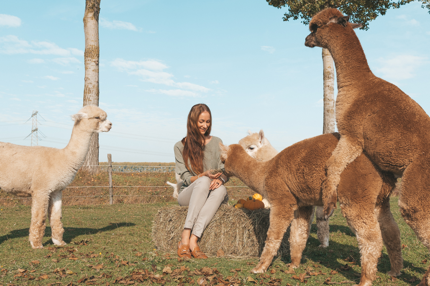 Alpaca's Linda's Wholesome Life