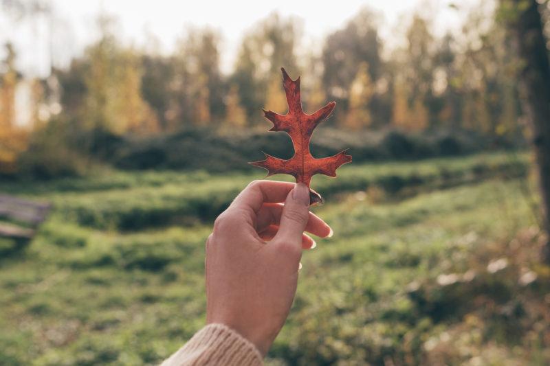 Autumn Desktop & iPhone Wallpapers