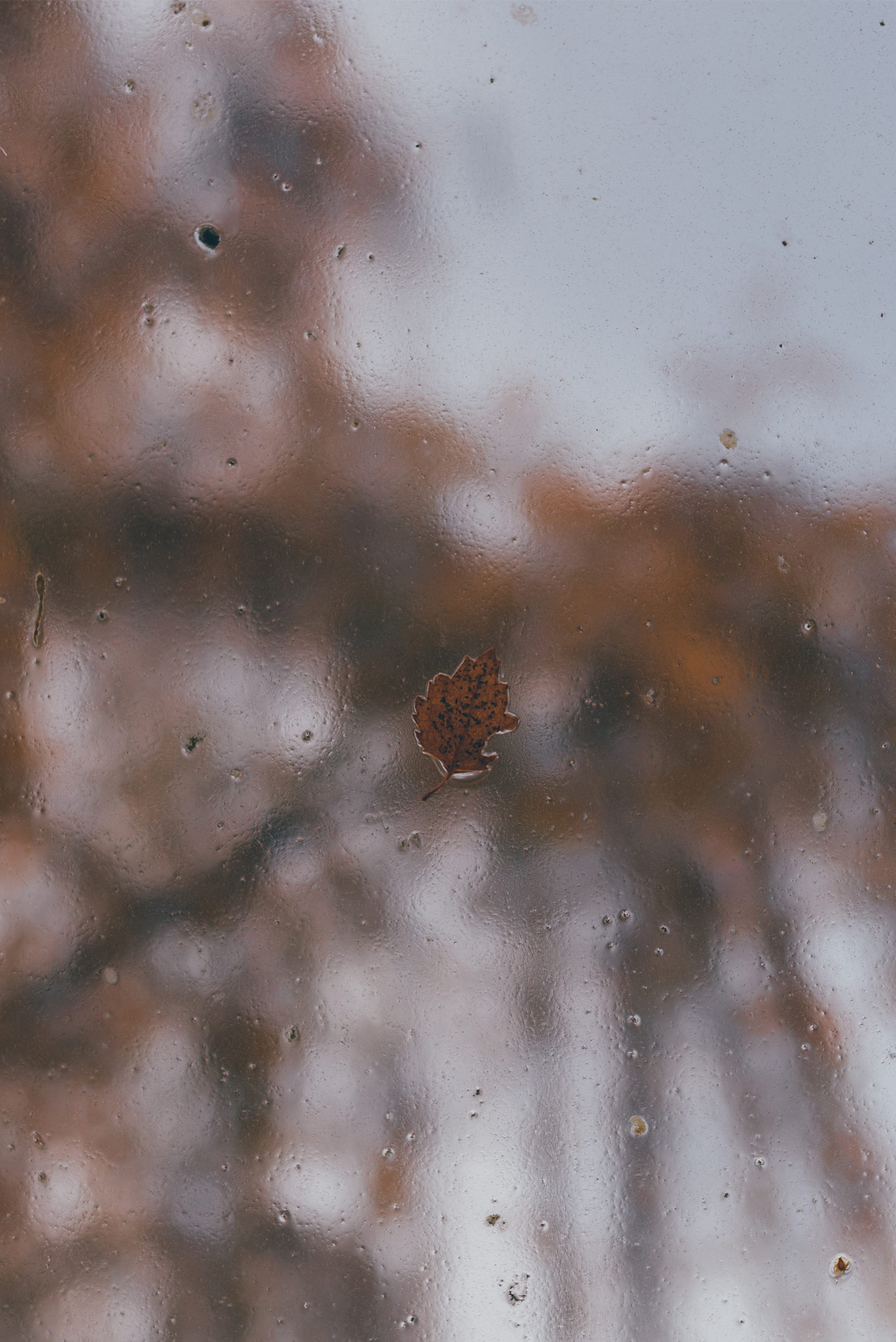 Autumn Desktop & iPhone Wallpapers