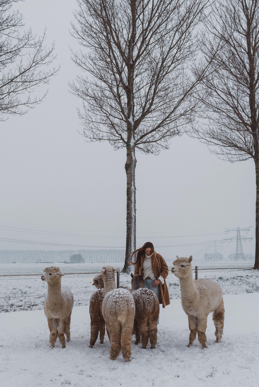 Self Love Routine Linda's Wholesome Life alpaca winter