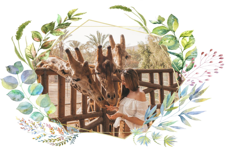 Dierenleed in toerisme en hoe wij dit kunnen voorkomen Linda's Wholesome Life