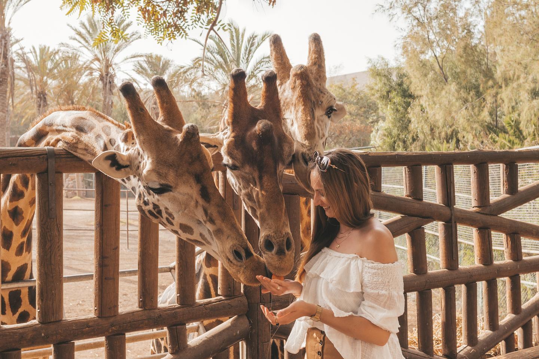 Misstanden dieren toeristen Linda's Wholesome Life