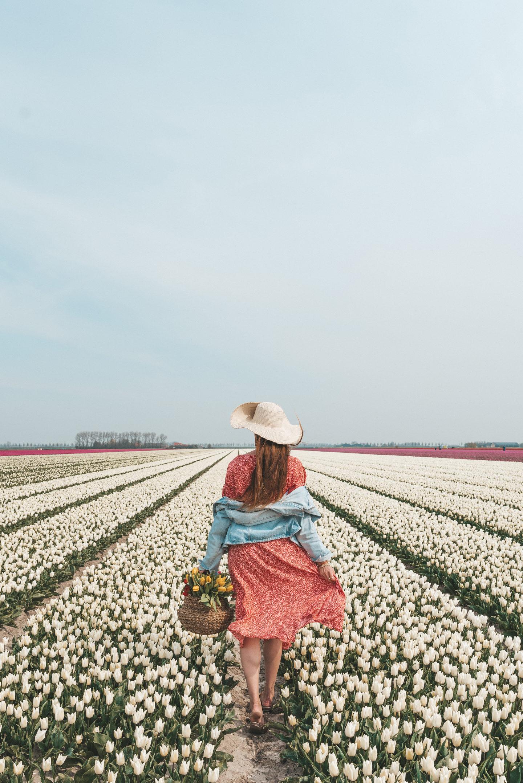 De mooiste tulpenvelden in Nederland Goeree-Overflakkee