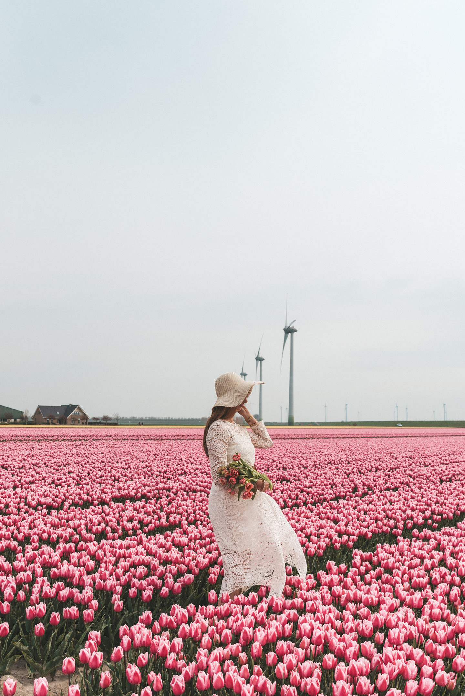 De mooiste tulpenvelden in Nederland
