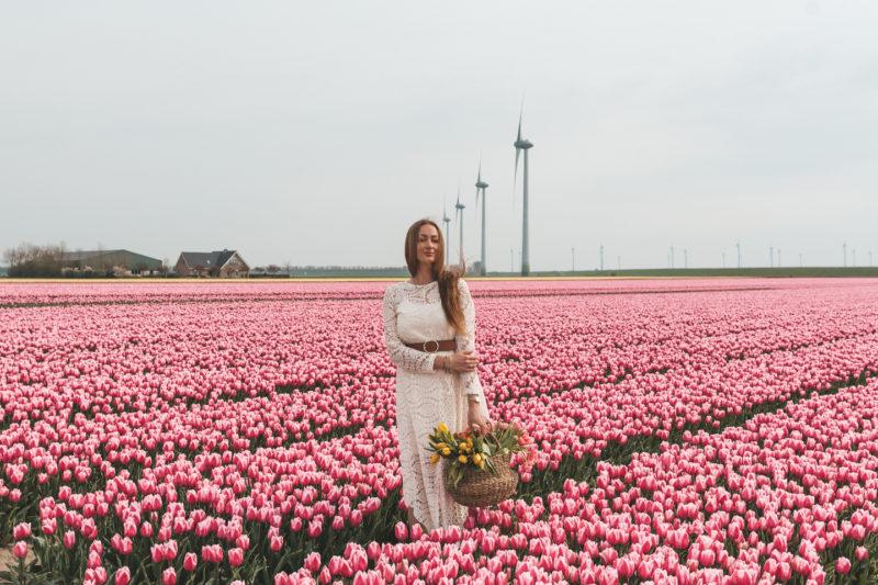 De mooiste tulpenvelden van Nederland