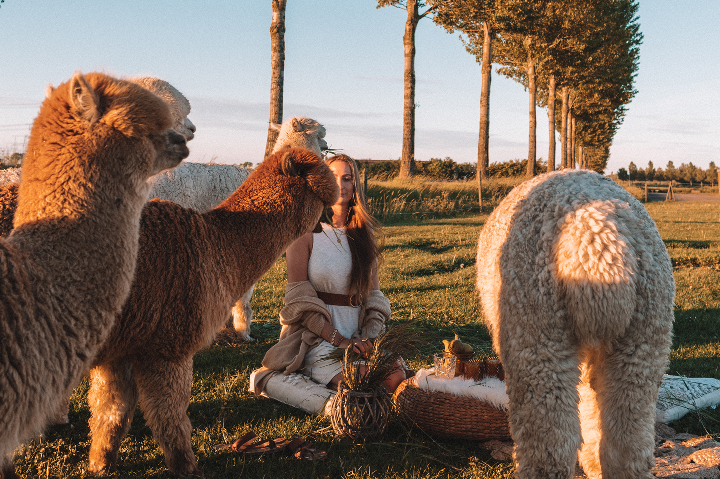 Update Linda's Wholesome Life alpaca picnic