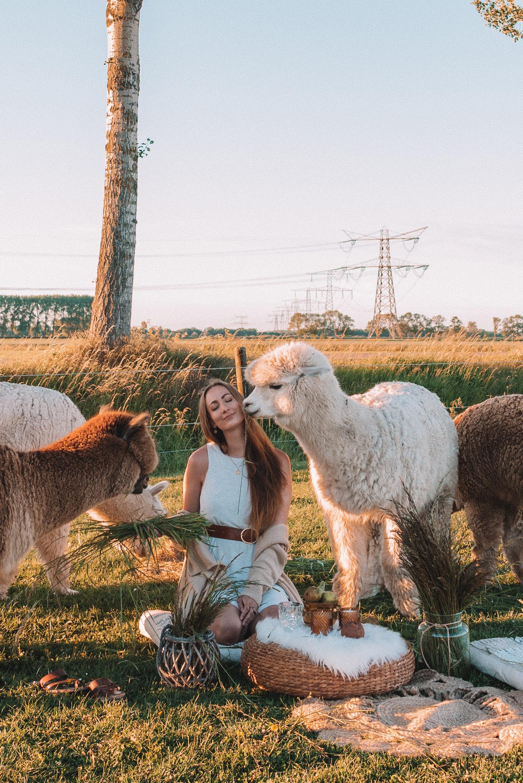 Linda's Wholesome Life alpaca picnic