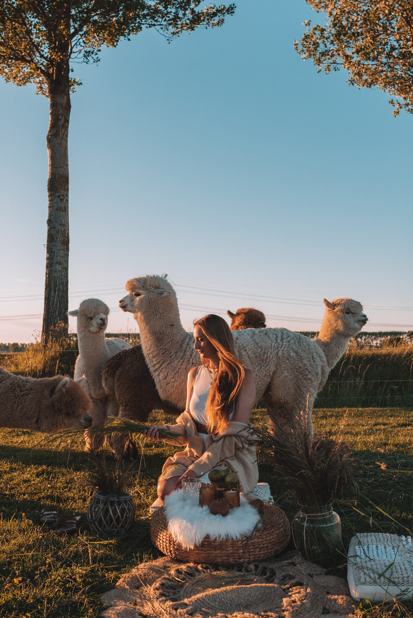 Linda's Wholesome Life alpaca picnic A public service announcement