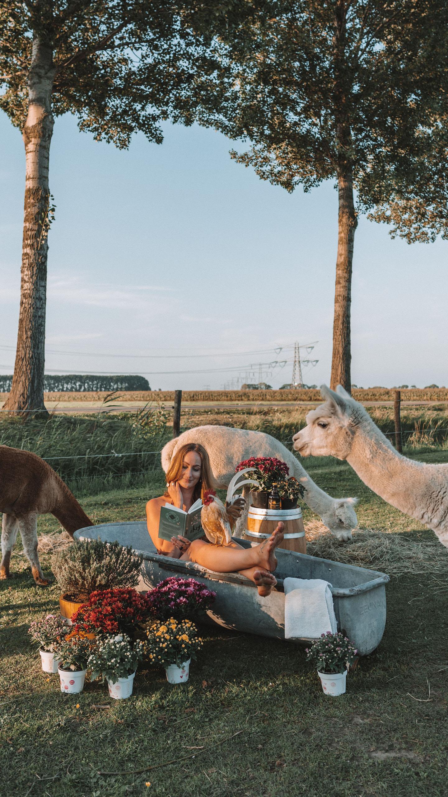 Belgian mums Alpaca's Linda's Wholesome Life