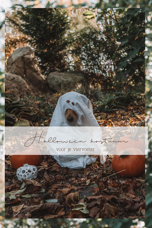 Halloween kostuum voor je hond DIY Pinterest