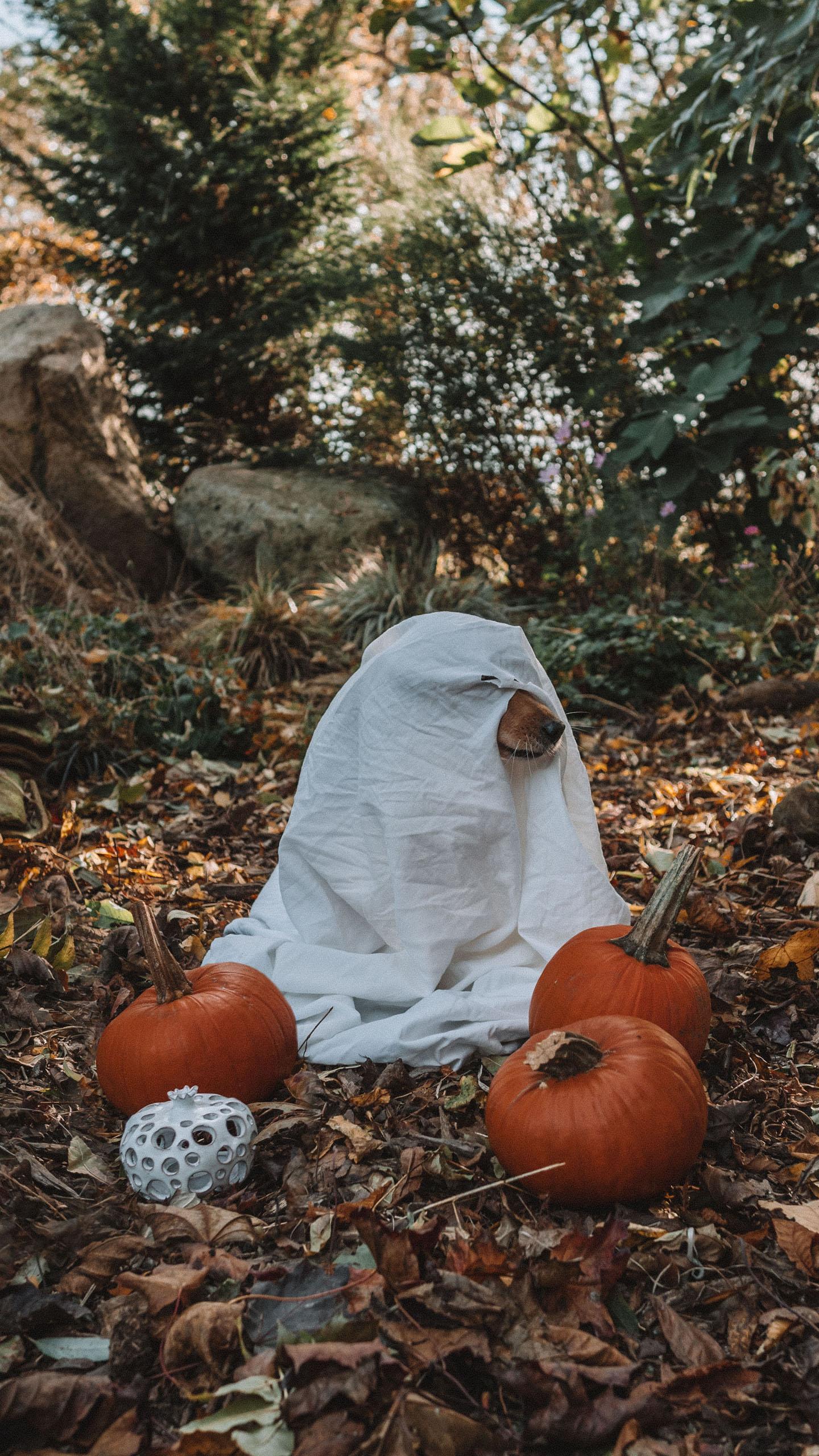 Halloween kostuum voor je hond