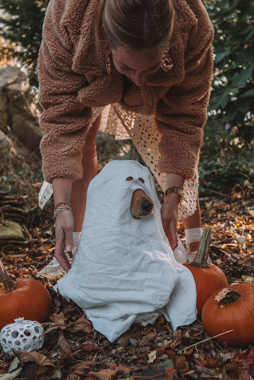 Halloween kostuum voor je hond DIY