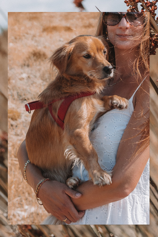 Kokoni klein Grieks hondenras Griekenland