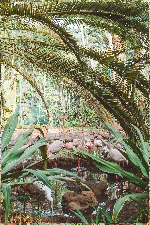 Oasis Park Flamingo