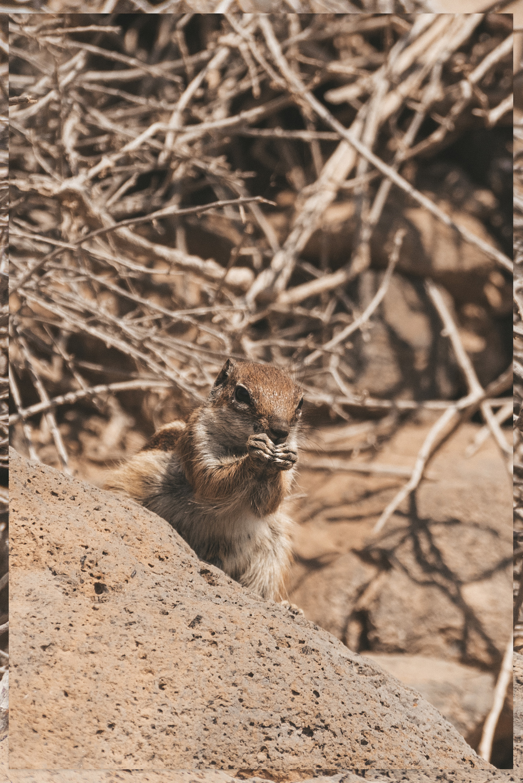 Wildlife spanje