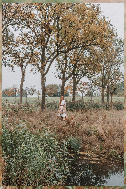 De Nieuwe Dordtse Biesbosch