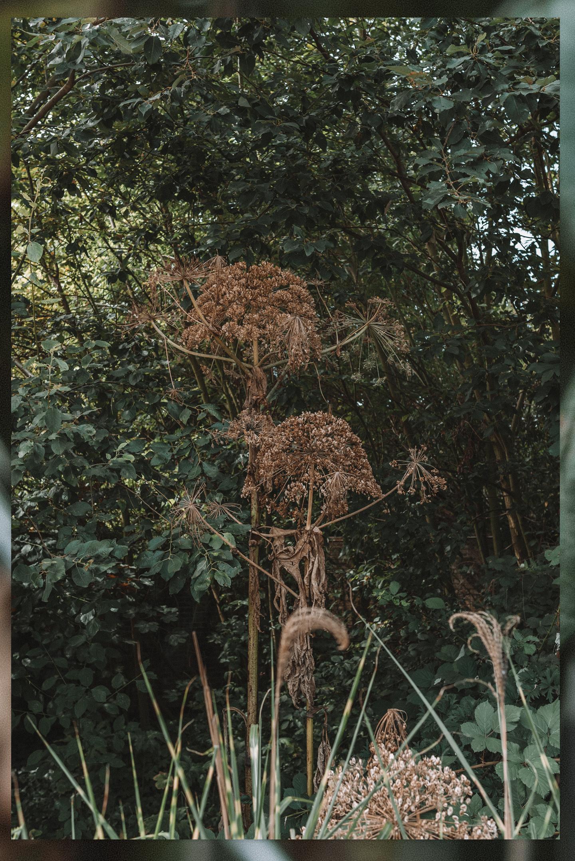 natuur belgië