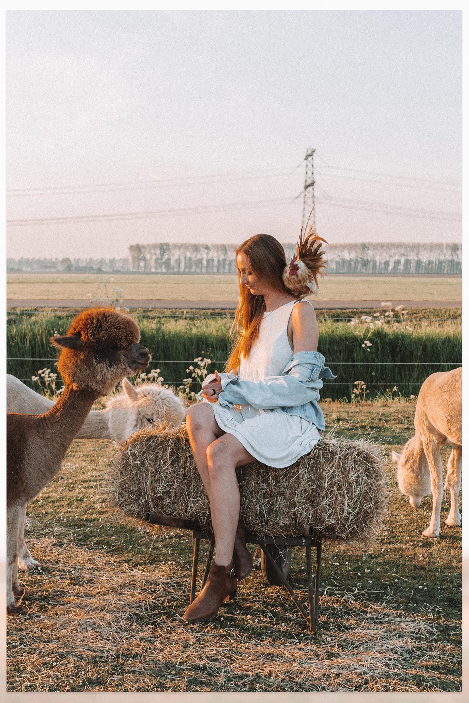 Gouden uurtje alpaca hooi