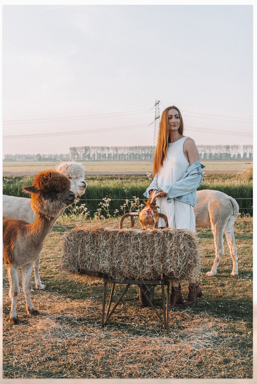 Gouden uurtje alpaca hooi Linda's wholesome Farm