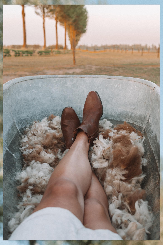 badkuip alpaca wol landelijk boerderij leven