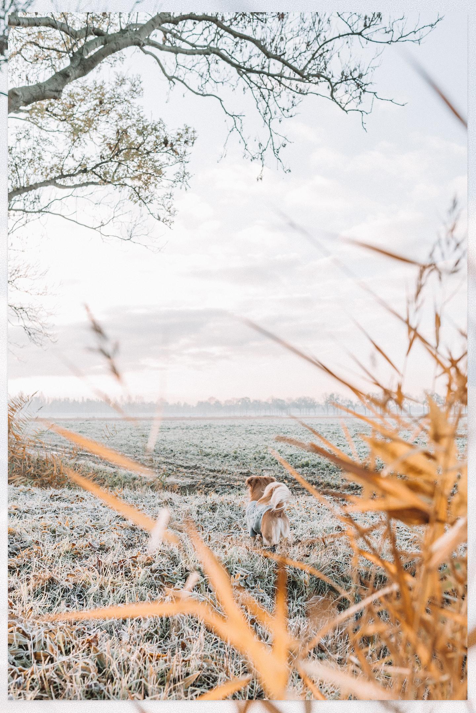 Polder de Biesbosch