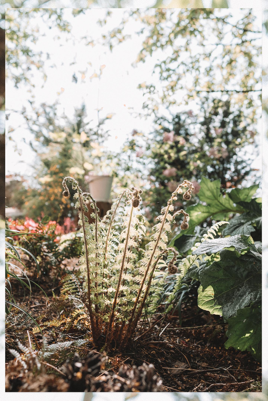 A Wholesome Garden