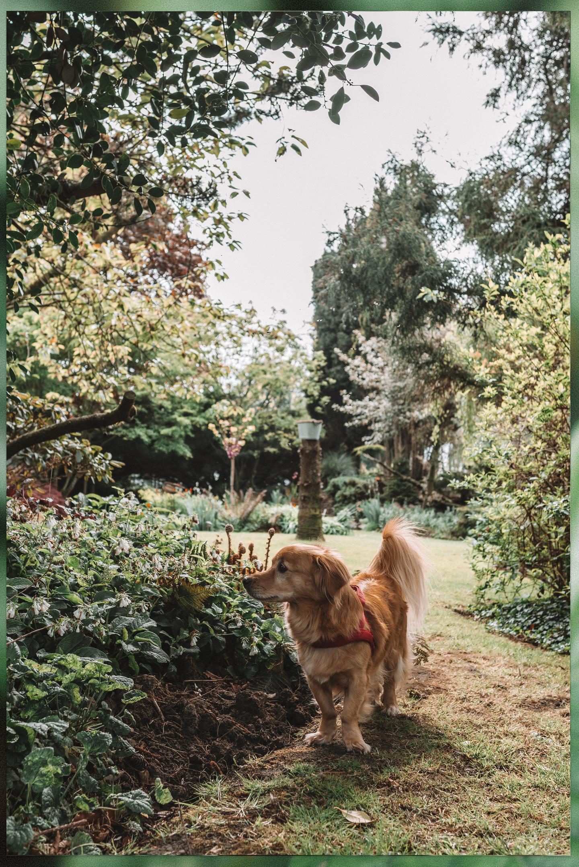 Dit kun je in mei in de tuin doen A Wholesome Garden