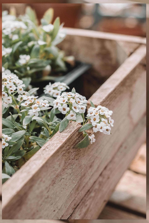 Dit kun je in mei in de tuin doen tips