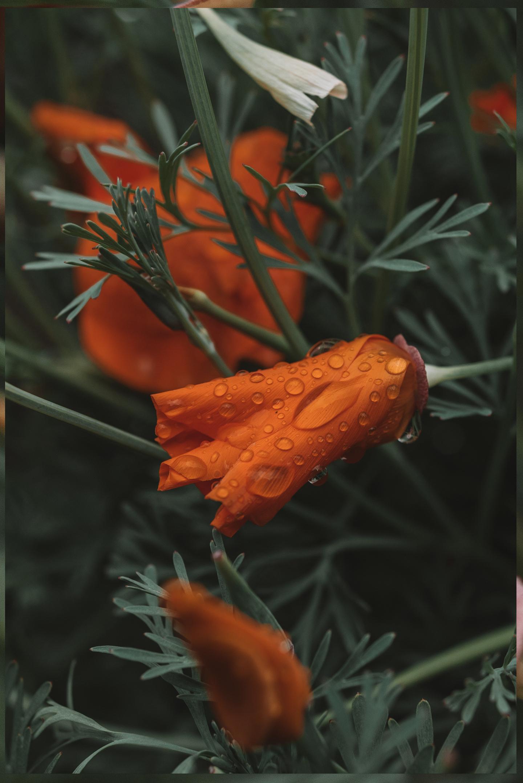 Macro foto bloem waterdruppels
