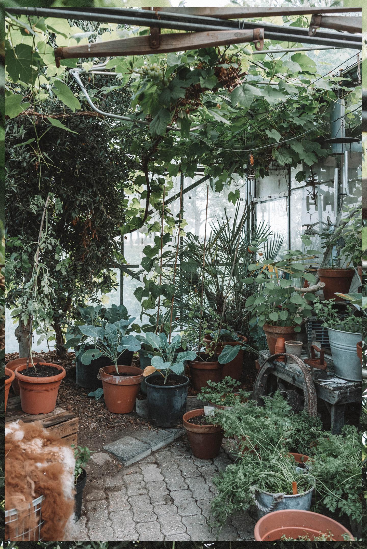 Dit kun je in augustus in de moestuin doen Linda's Wholesome Garden