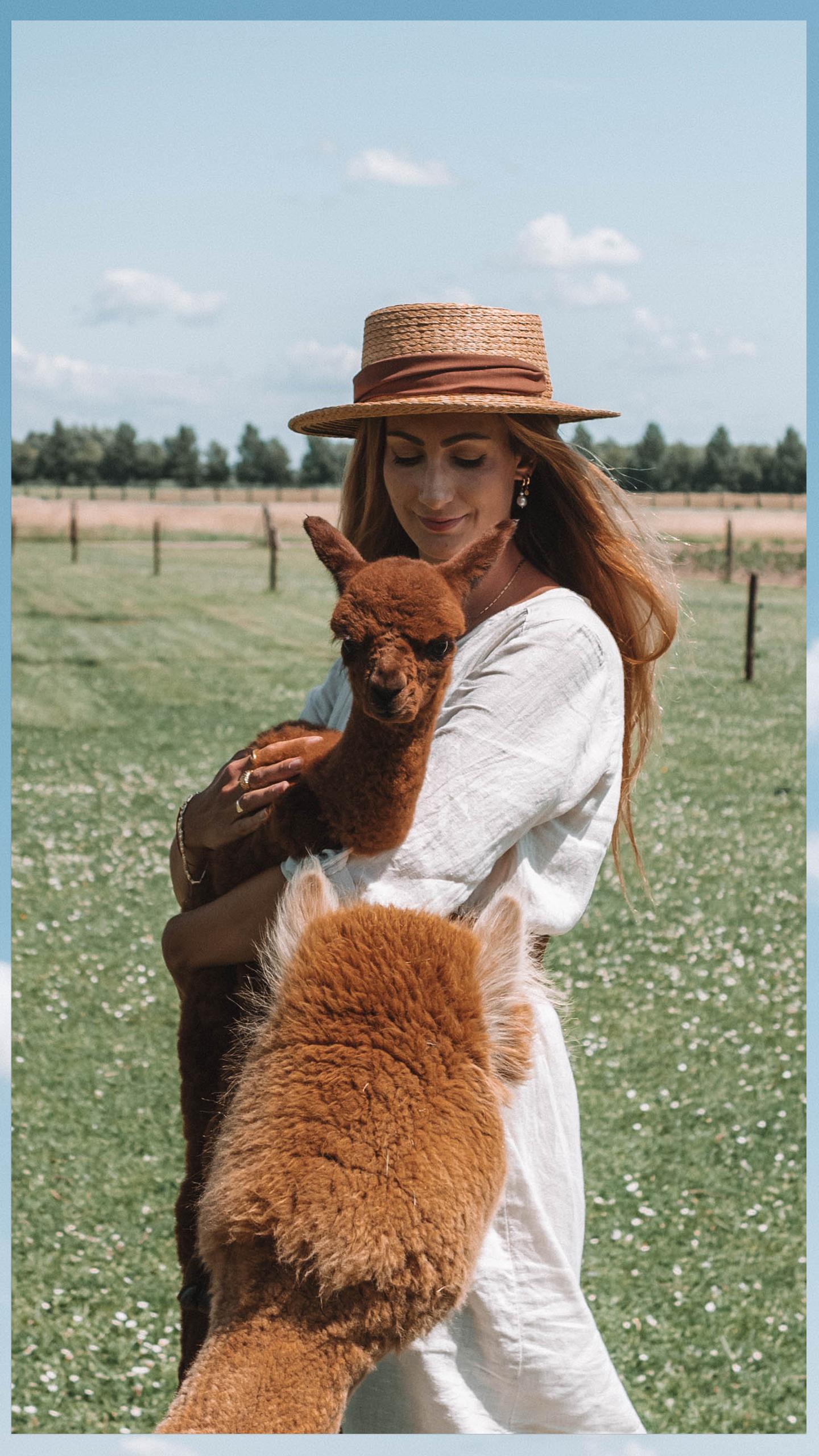 Welkom Freek alpaca cria